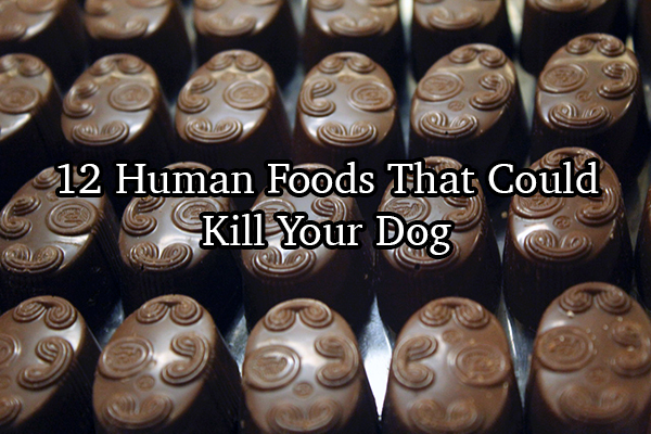 12 Human Foods You Didn't Know Could Kill Your Dog