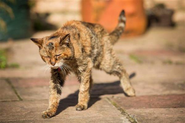Worlds Oldest Cat
