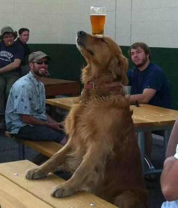 puppy-talent