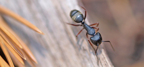 Ants-Cover-Food-Remedies-Pete