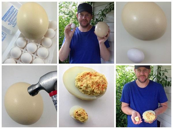 Deviled Ostrich Egg