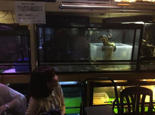 Reptile-Cafe-02