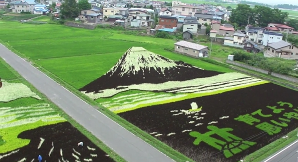 Rice-Paddies-Art-Mountain