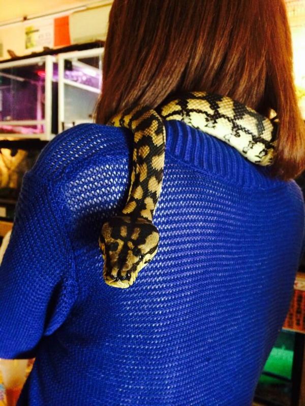 reptile-back