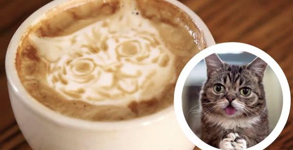 Latte-Meme-Cat