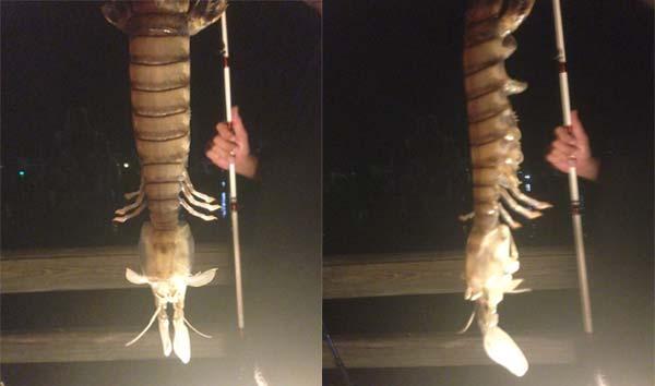 Mantis-Shrimp-Giant