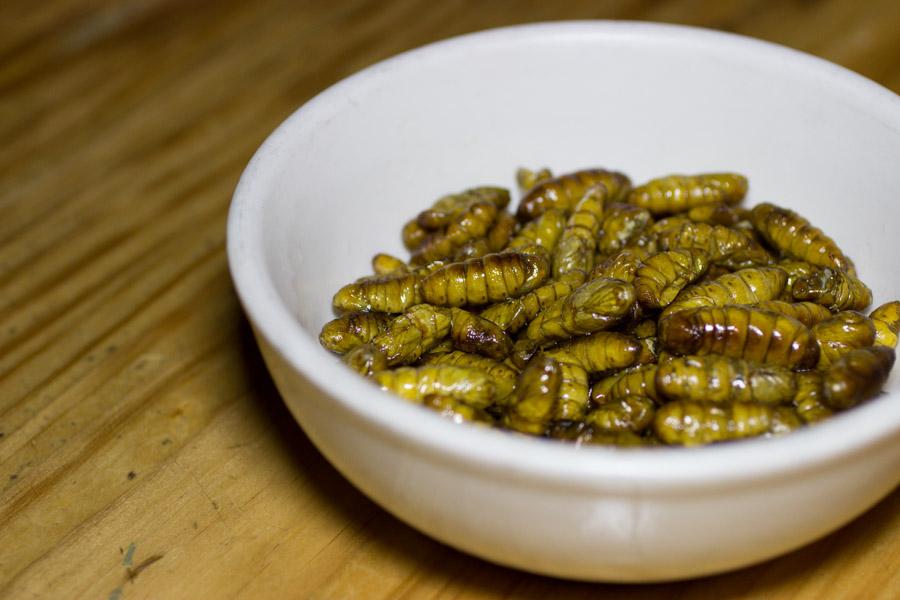 Silk Worms-6829