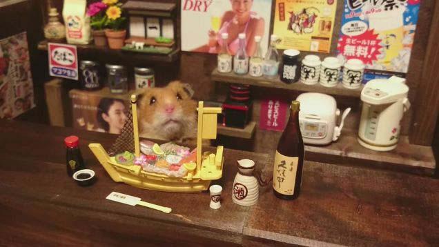 Hamster-03