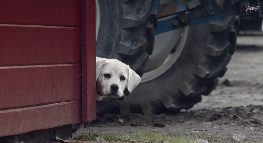 Budweiser's 'Lost Dog' Super Bowl Ad Will Break Your Heart, Then Piece It Back Together