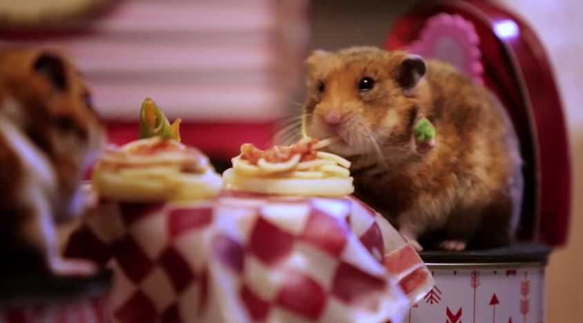 These cute hamsters do valentine 39 s day better than most for Valentine s day meals to cook together