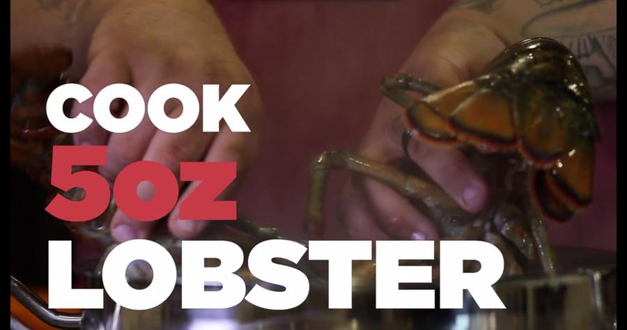 Lobster-51