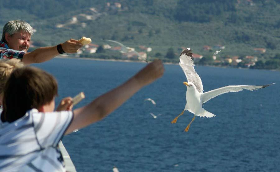 Fat-Sea-Gulls