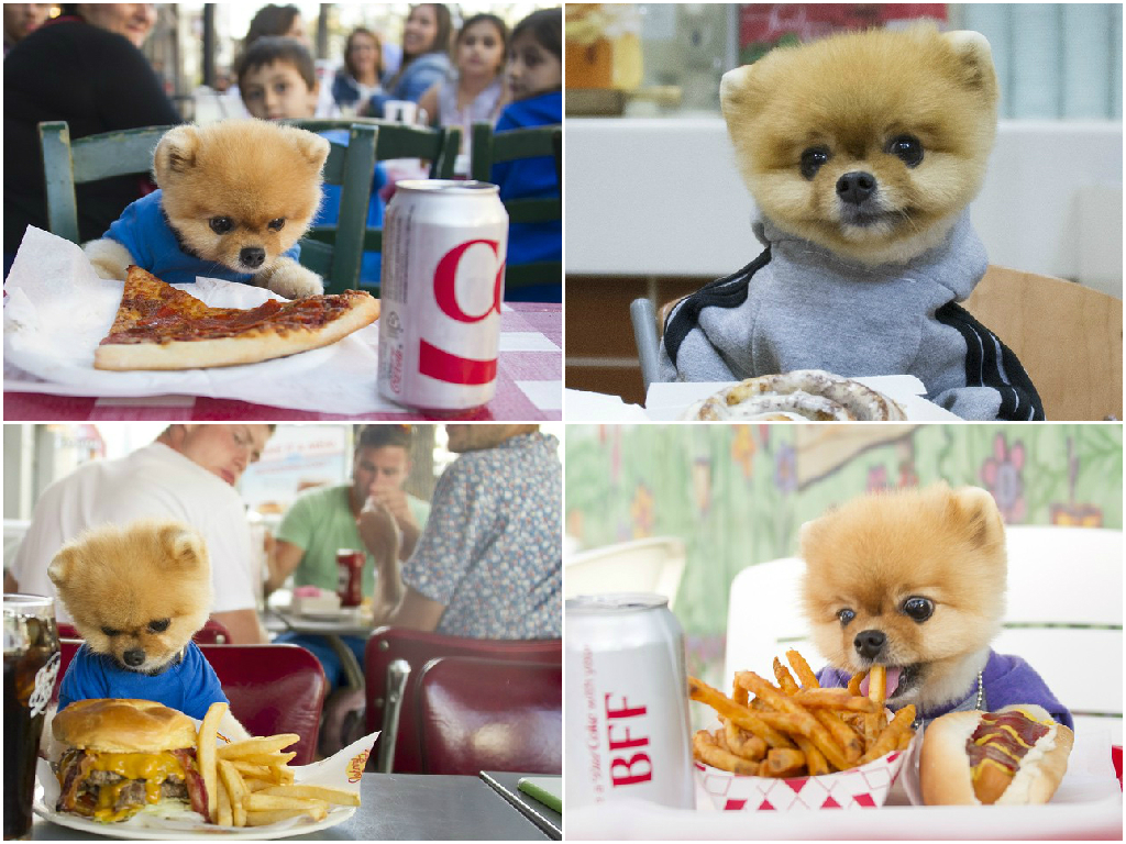 Here S Why Jiff The Pomeranian Is The Cutest Foodie In The World