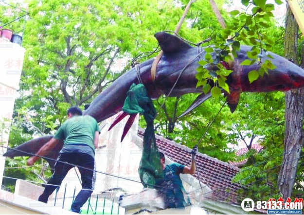 Super Rich Chinese Man Has Massive Illegal Shark Hoisted Into His Backyard