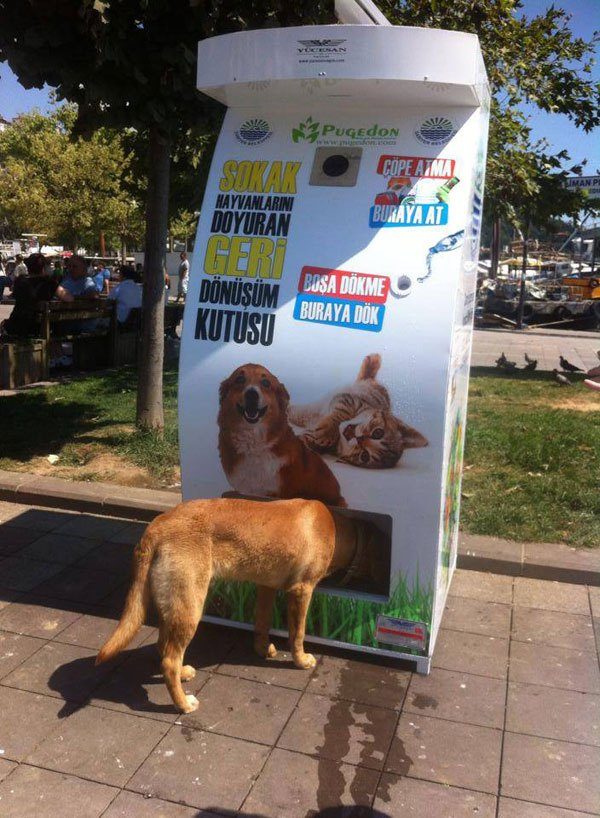 vending-machine-feeds-stray-animals-in-exchange-for-recycled-bottles-1 (1)