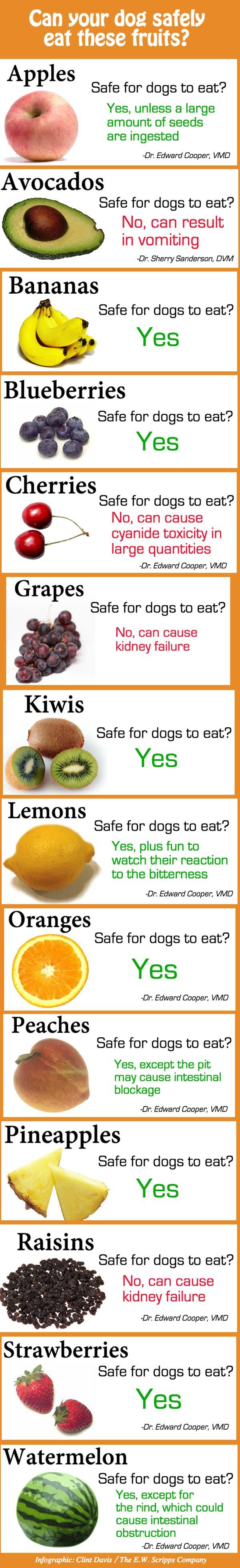Dog-Food-Safety-Info