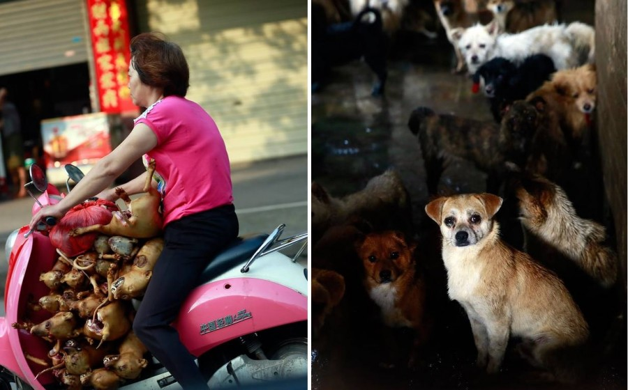 Cat And Dog Eating Festival In China