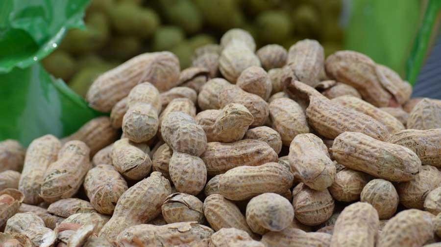 Salmonella-Sentence-Peanuts