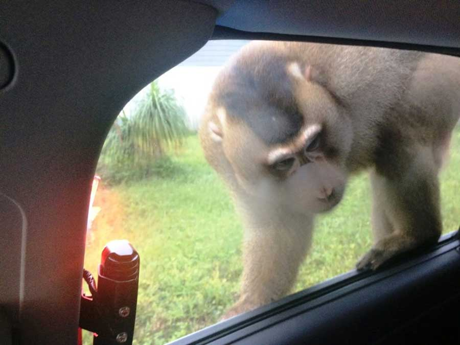 Monkey-Mail-Window