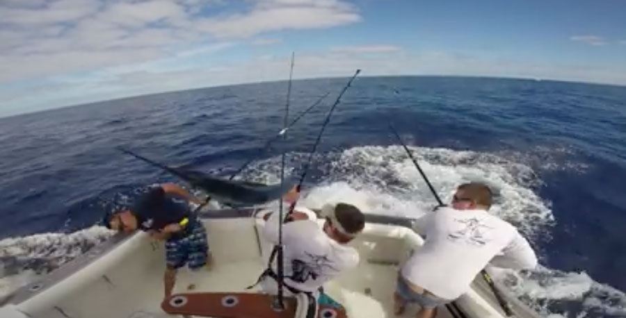 Fish-Stabbing-2015