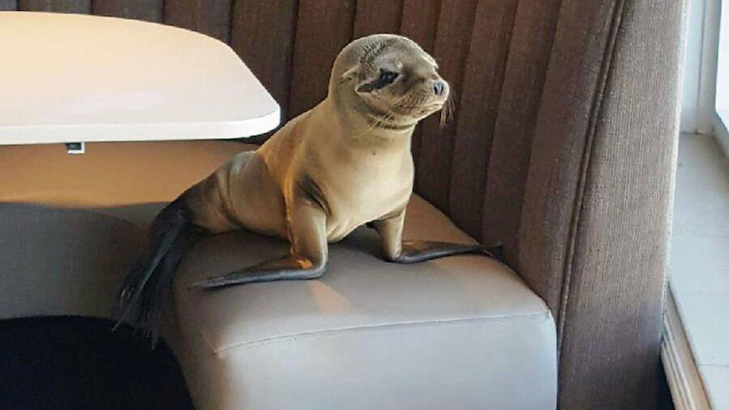 sea_lion_at_restaurant