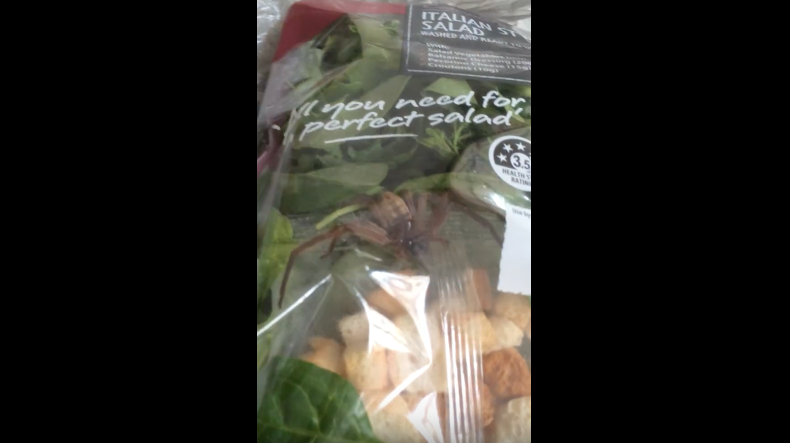 Giant Spider Found Kickin' It Inside Pre-Packaged Salad Mix
