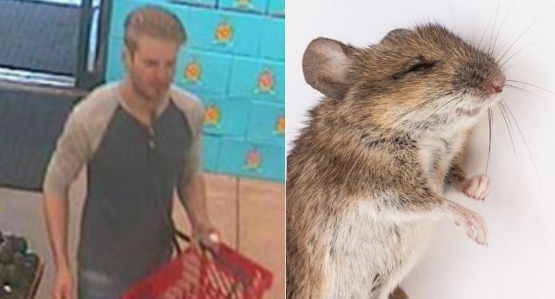 mouse-rat-poison-ass-hole