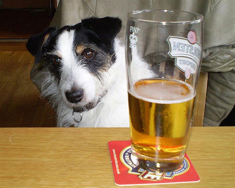 Dog-Beer-01