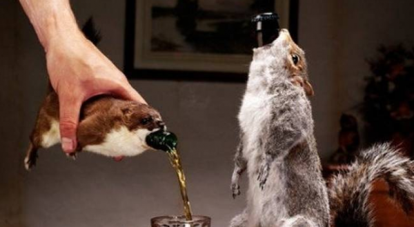 End of History, Taxidermy Beer
