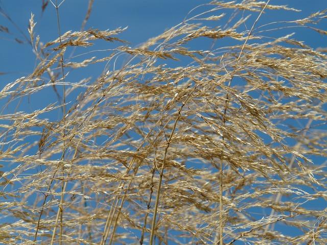 grass-60416_640