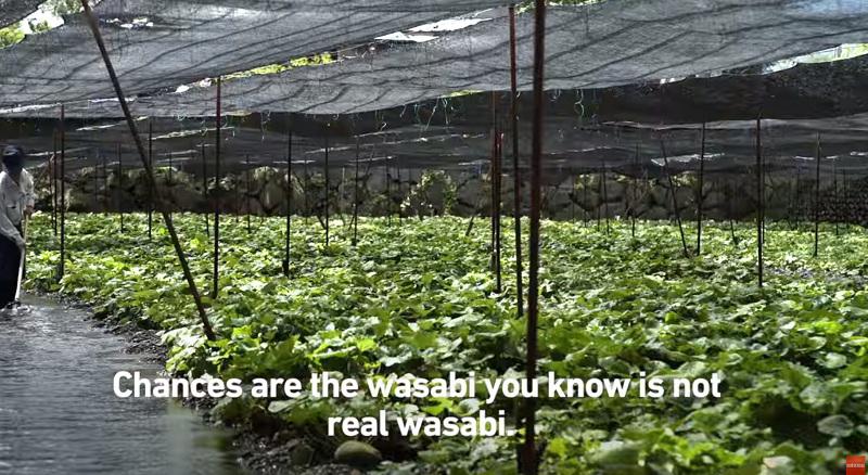 wasabi-ns-003