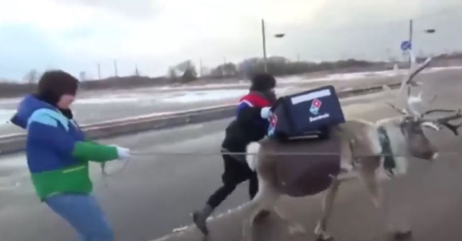Domino's Is Training Reindeer To Deliver Pizza In The Snow [WATCH]