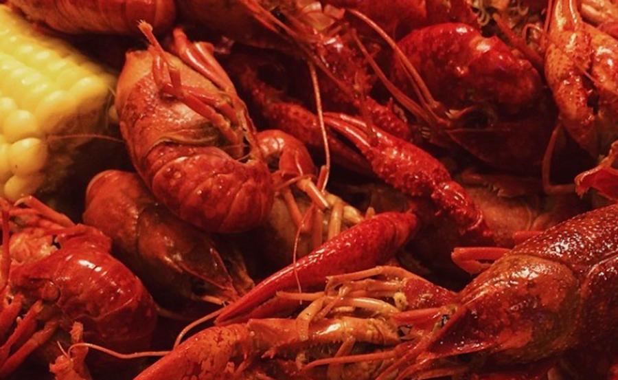 crayfish-stk-001
