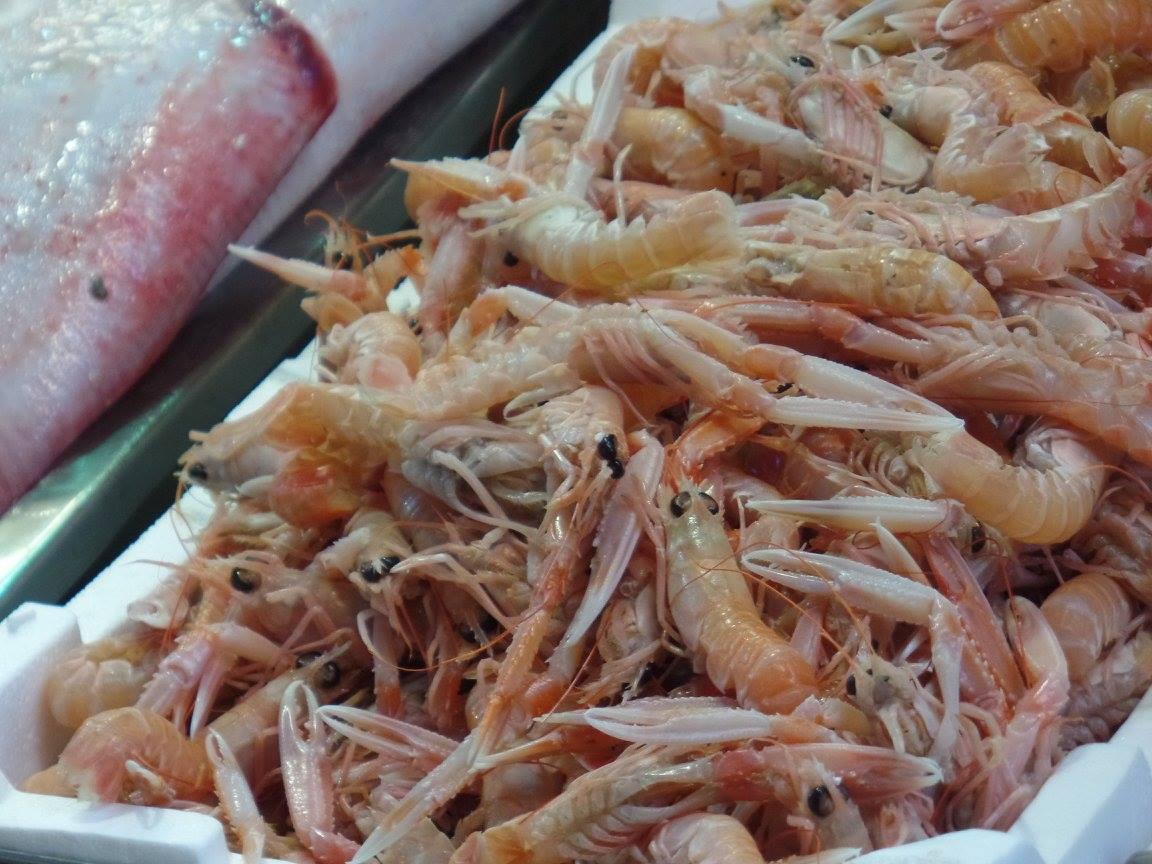 shrimp-costa-stk