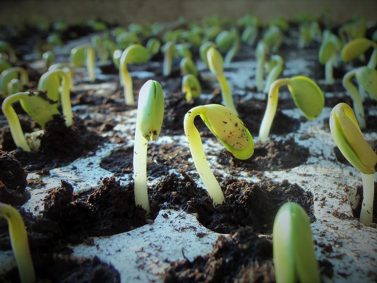 plants-1331667_1280
