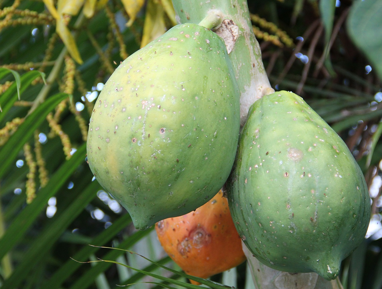 ripe-papaya-1634867_1280