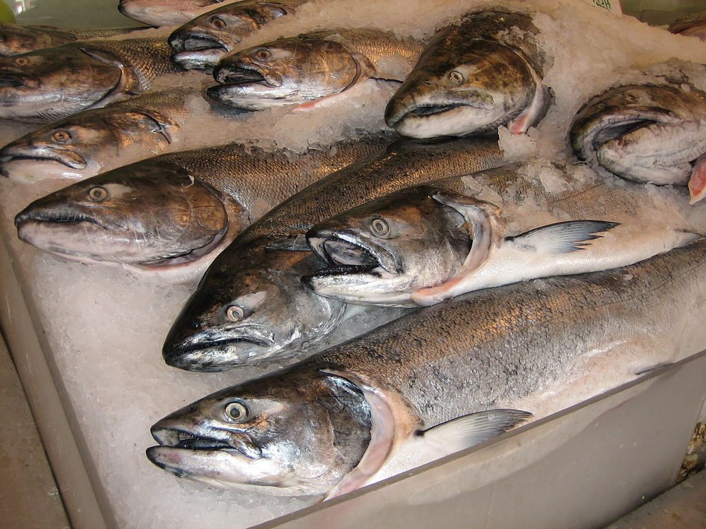 salmon lice