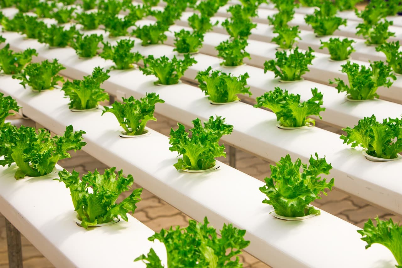 hydroponics in organic farming